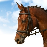 "Image for the Sport programme ""Equestrianism Replay"""