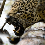 "Image for the Documentary programme ""Destination Wild: Colombia"""