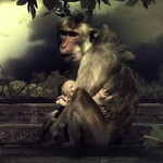 "Image for the Nature programme ""Dark Days in Monkey City"""