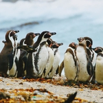 "Image for the Documentary programme ""Meet the Penguins"""