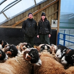 "Image for the Documentary programme ""Addicted to Sheep"""