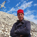 "Image for the Documentary programme ""The Last Seabird Summer?"""