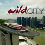 "Image for the Documentary programme ""Attenborough: Wild City"""