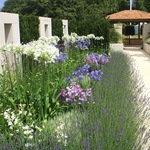 "Image for the Gardening programme ""The RHS Hampton Court Palace Flower Show"""