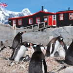 "Image for the Nature programme ""Penguin Post Office"""