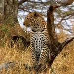 "Image for the Documentary programme ""Big Cats"""